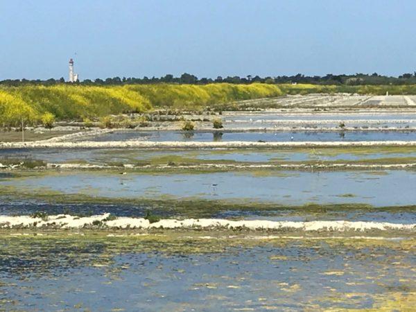 Marais salants - vue sur le phare des baleines